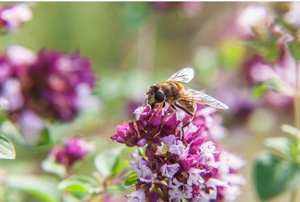 honing is niet vegan - waarom is honing niet vegan?