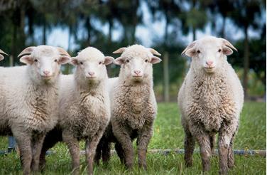Wol - alternatieven voor wol - leed achter wol