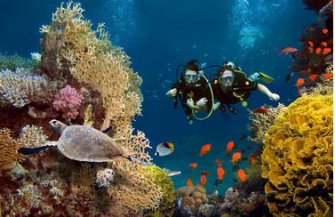 onderwaterwereld op Bonaire - duiken op bonaire