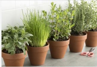 bloempotten - terracotta potten - planten zijn goed voor je