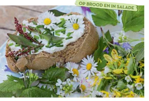 eet bare bloemen zoals madeliefjes