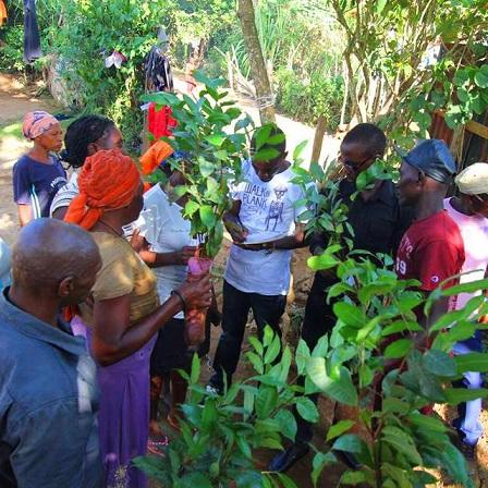 Fruitbomen voor Kenia